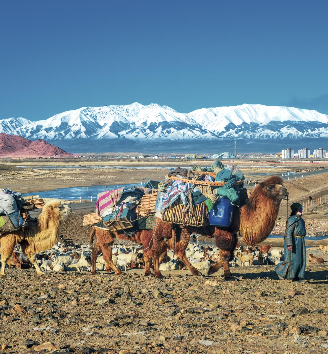 A person walks with several animals carrying supplies near a mountainous area.