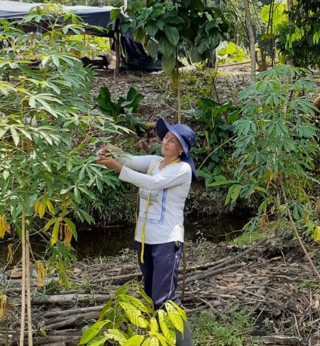 一个戴着蓝帽子、穿着白衬衫的妇女在树上采摘果实。