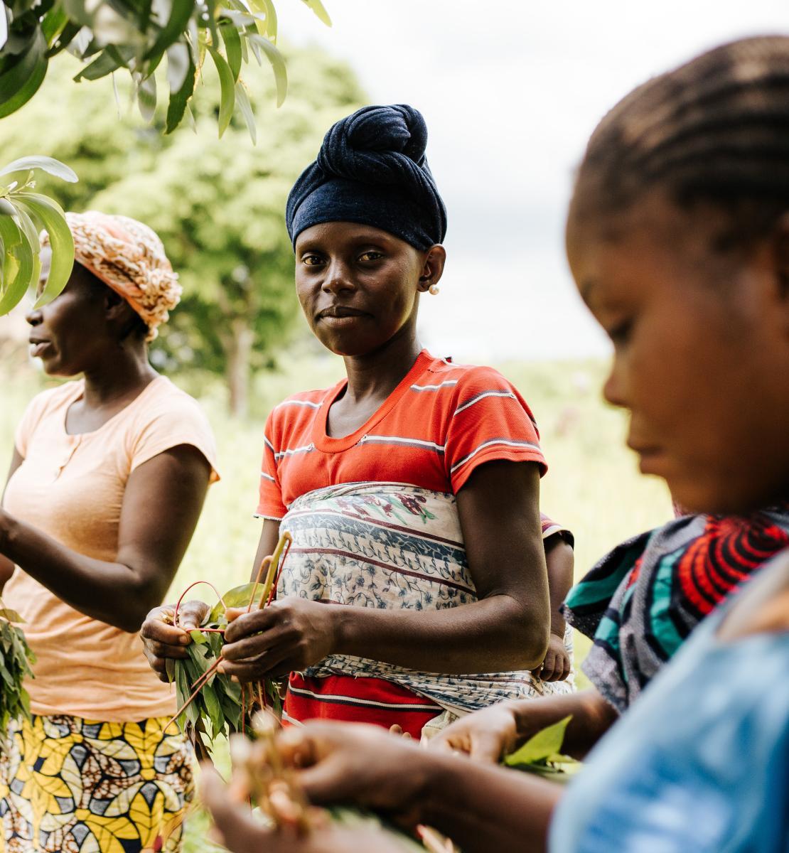 Three women harvest food in a field.